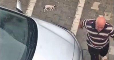 Kediyi ezen komşunu görüntüledi