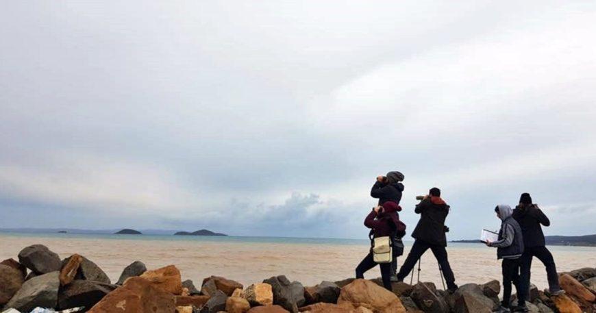 Yeni kuş cenneti Çanakkale!