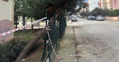 Belediyeden ağaç açıklaması!