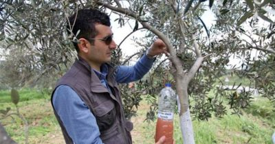 Alçıtepe Köyü'nde yeşil gübreleme