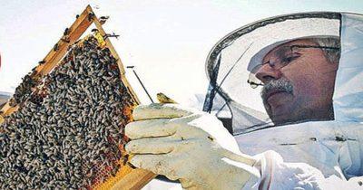 Gökçeada arısı tescillendi