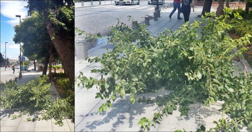 Katil ağaç…  Yine biri mi ölmeli?