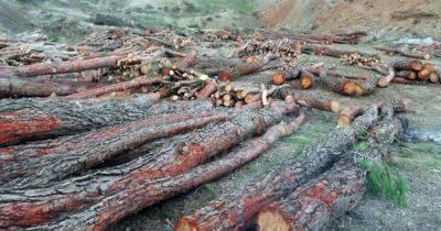 Denizgöründü'de ağaçlar neden kesiliyor? (VİDEO)