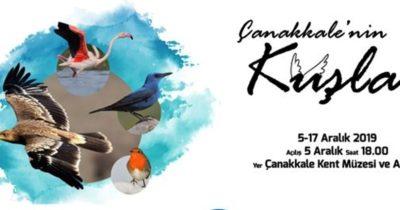 Çanakkale'nin kuşları sergi oluyor