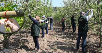 Elma kurtlarına karşı mücadele başlatıldı