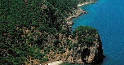 Saros Körfezi'nde 8 bine yakın ağaç kesilecek