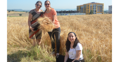 Karakılçık buğdayı hasat edildi (Video Haber)