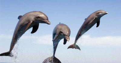 Yunuslar birbirlerine öğretiyor