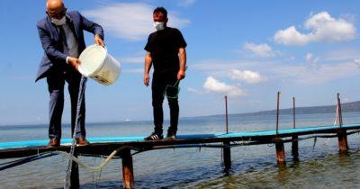 10 bin çipura yavrusu denize salındı
