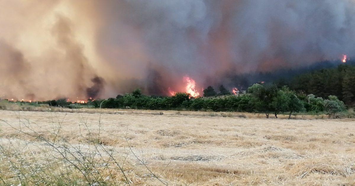 19 saatte 450 hektar ormanlık alan yok oldu (Video Haber)