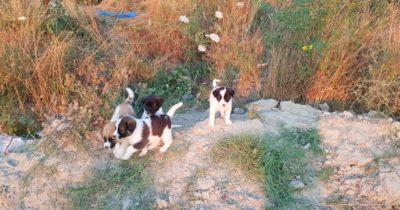 Güzelyalı yazlıkçıların bıraktığı köpekler ile doldu
