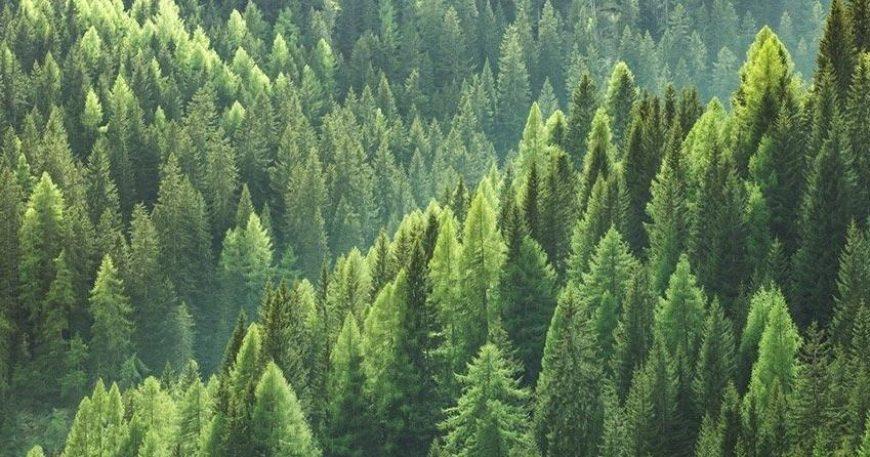 Küçük bir neden büyük bir afete sebep olabilir… #ormanvatandır (Videolu)