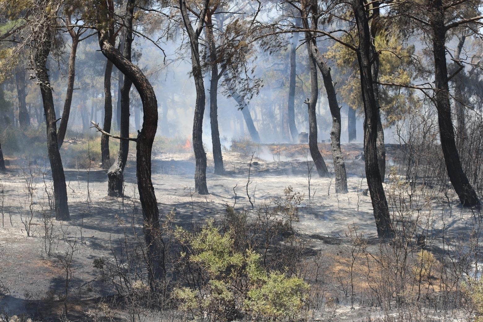 Adilhan'da orman yangını