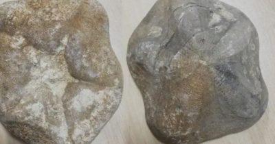 30 milyon yıl öncesine ait… Değeri 4 milyon lira!