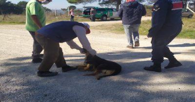 Anne köpek ve yavrularını jandarma kurtardı