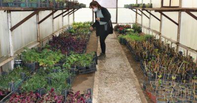 Bayramiç Belediyesi, kendi çiçeklerini üretiyor