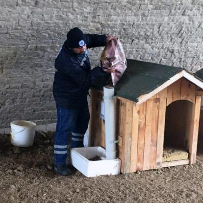 Soğuk havalarda sokak hayvanlarını unutmadı