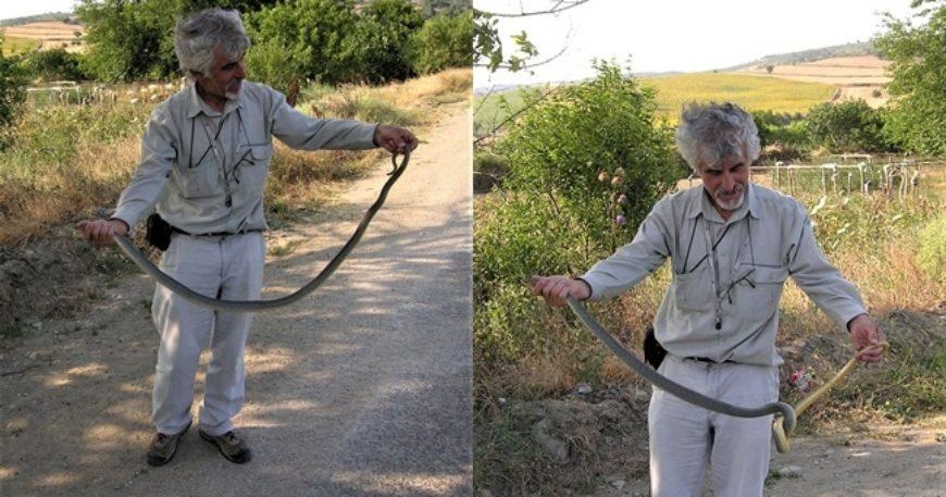 Doğan Perinçek yılan yakaladı