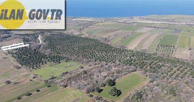Çanakkale Lapseki'de 10.313 m² tarım arazisi icradan satılacaktır