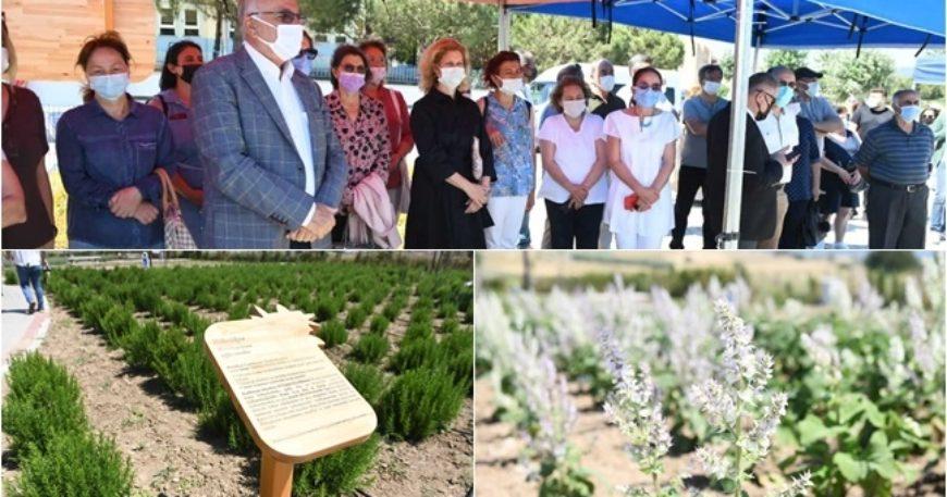 Aromatik ve Tıbbi Bitkiler Parkı açıldı
