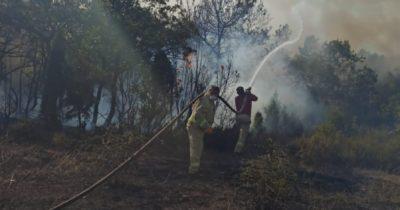 Lapseki'de orman yangını!